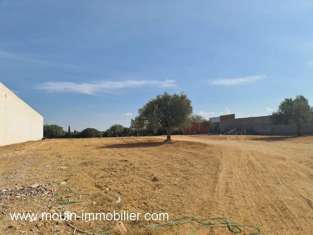 terrain à vendre à Hammamet